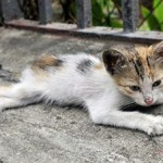 How to Adopt a Stray Cat