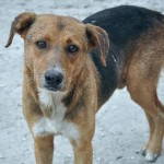 How to Adopt a Stray Dog: Some Useful Tips