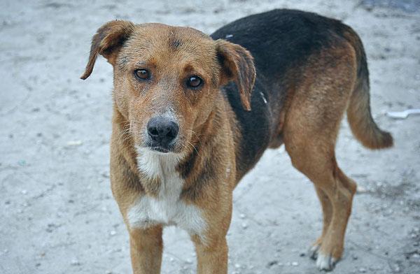 adopting-a-stray-dog