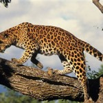 10 Most Endangered Animals in the World