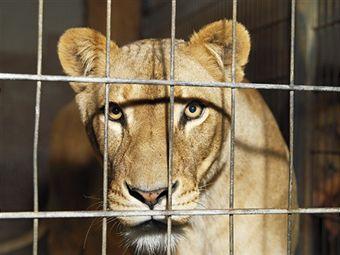 animal-confinement