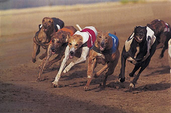 animal-racing-inhuman