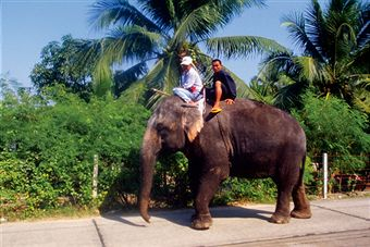 animal-ride-abuse