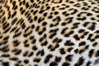 animals-killed-for-skin
