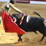 10 Most Cruel Sports Involving Animals
