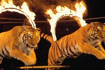 circus-abuse-animals