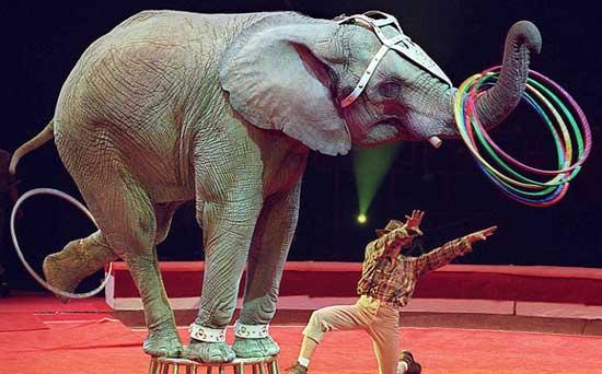 circus-elephant