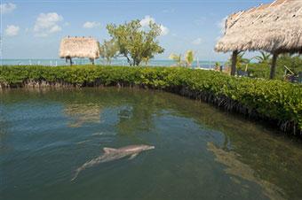 dolphin-in-marine-park