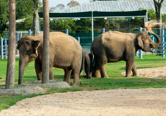 elephants-in-zoo