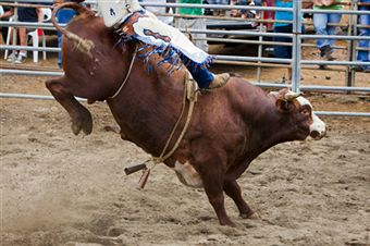 rodeo-cruelty