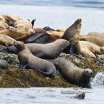 Seal Slaughter Facts: The Shocking Truth