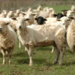 10 Ways We Hurt Animals Unknowingly