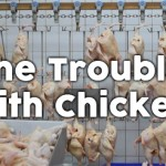 U.S. Chicken Infected with Dangerous Pathogens