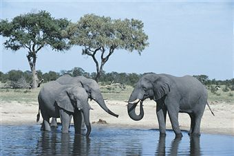 vegan animals elephants