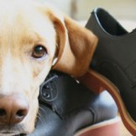 Vegan Footwear: Protect Your Feet Without Hurting Animals