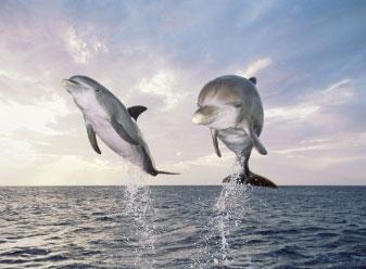 yangtze-river-dolphin