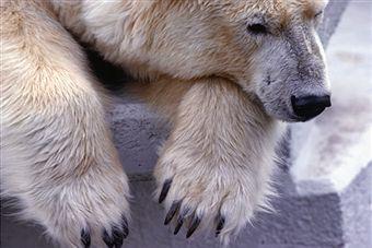 zoo-isolates-animals